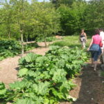 jardin du marais