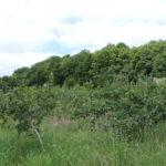 les pommiers variétés anciennes